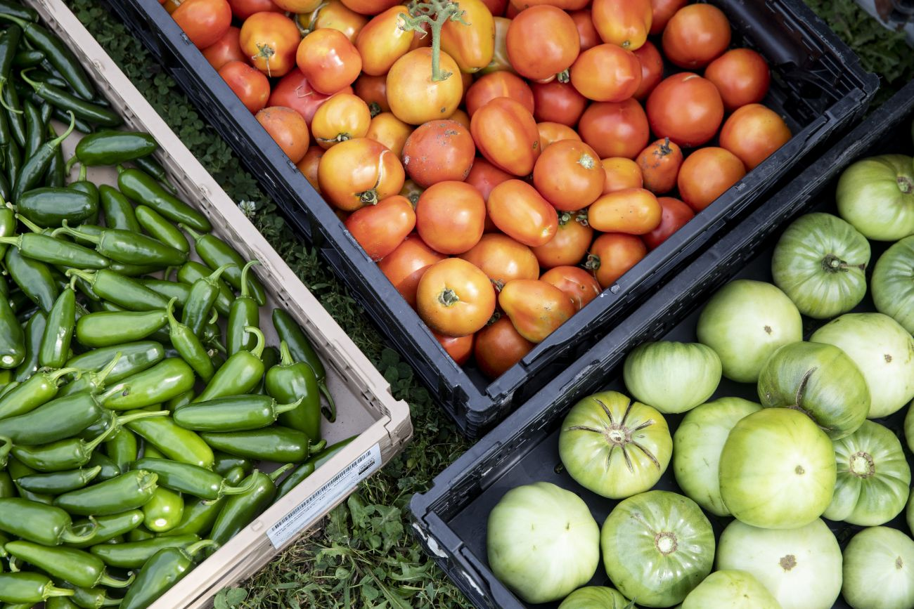 Appetite for Change's urban farms produced 9,554 pounds of produce in 2019
